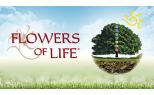 4ever Young (Flowers of Life)